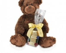 Ghirardelli Bear and Chocolate Squares